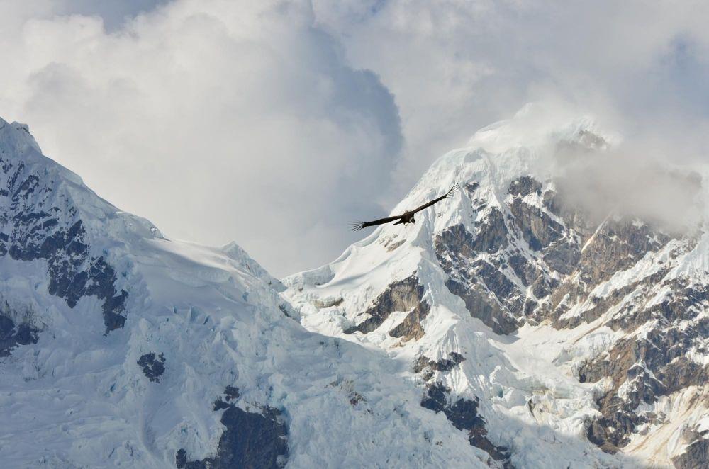 Condor devant le Pumasillo, depuis le col de San Juan, Trek de Choquequirao, Pérou