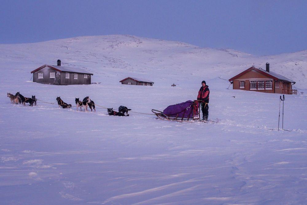 traineaux à chiens devant un refuge