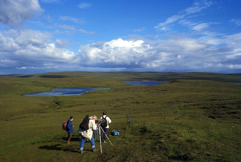 Observation îles Shetland Ecosse