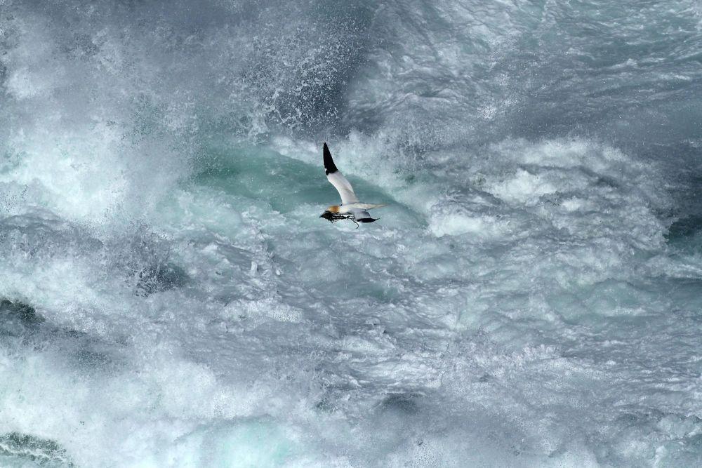 Oiseau îles Shetland Ecosse
