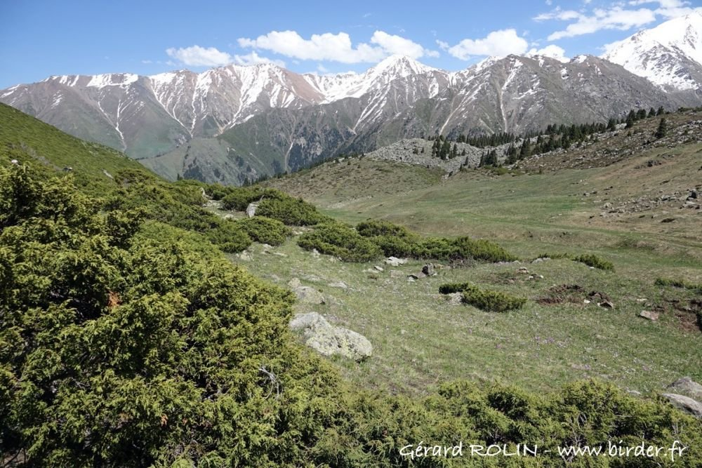 Montagnes du Tian Shan Kazakhstan