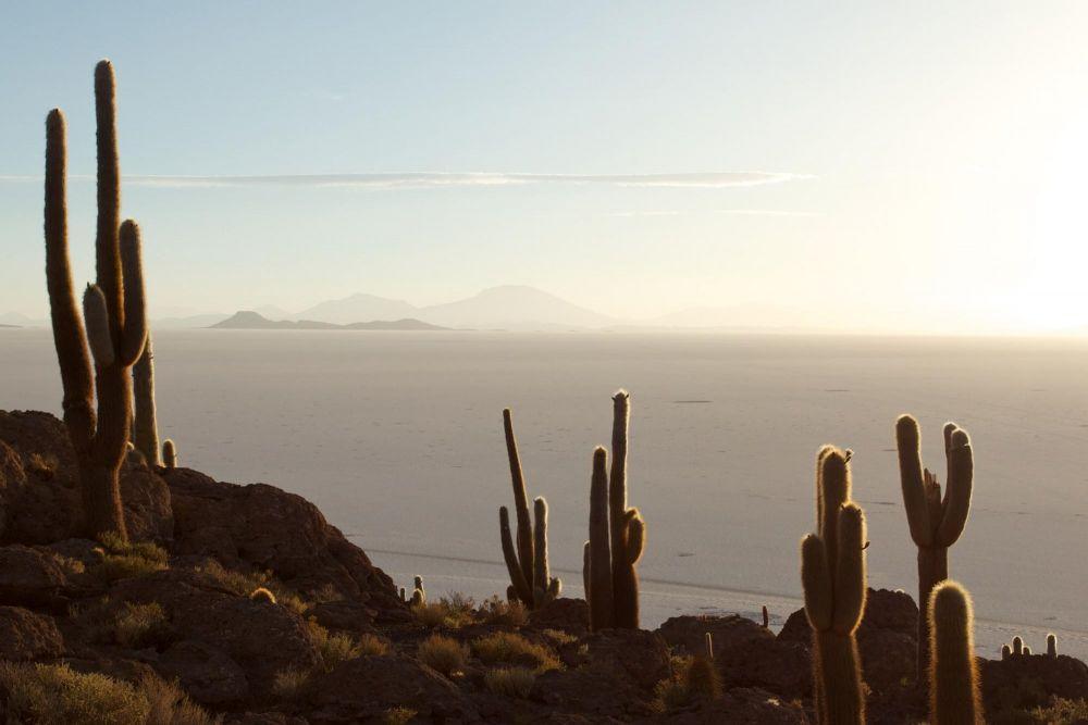 Cactus sur l'île d'Incahuasi, Salar d'Uyuni, Bolivie