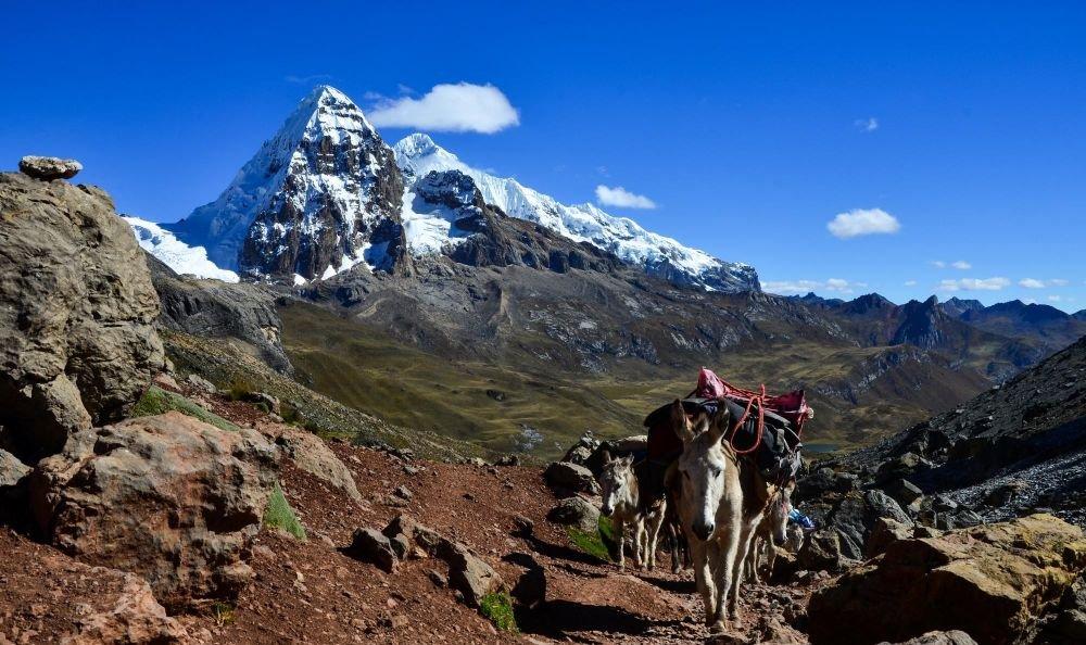 caravane muletière au col de Portachuelo, face au Mont Trepecio (5653m), Cordillère de Huayhuash, Pérou