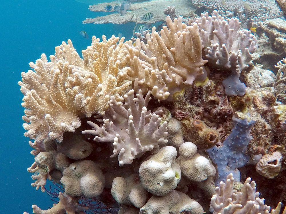 coraux aux raja ampat