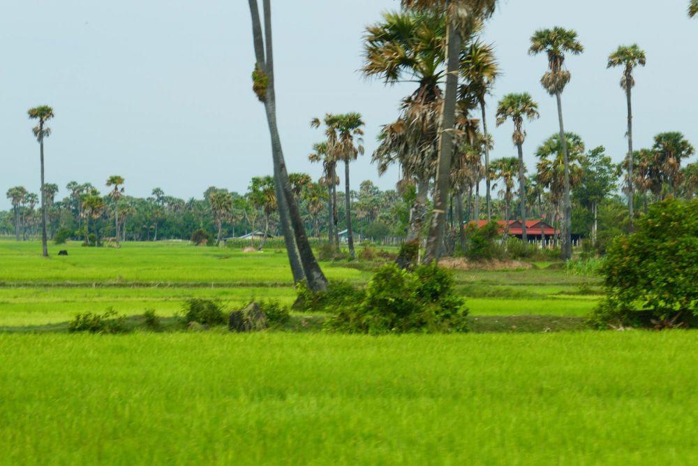 Photo voyage Cambodge 4