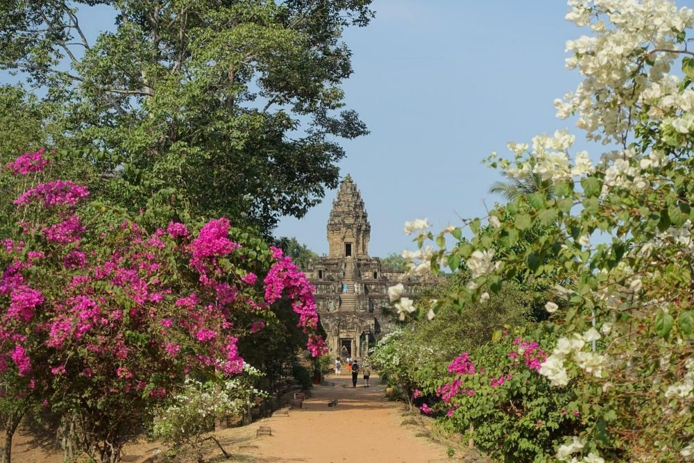 angkor avec arbre fleuri