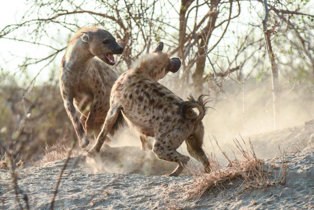 Photo voyage Botswana 5