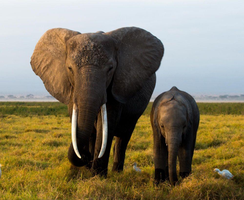 Eléphant mère et son éléphanteau