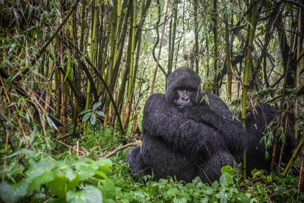 Photo voyage Ouganda 2