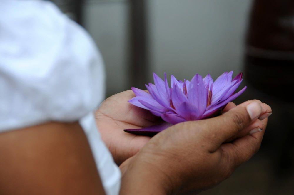 offrande d'une fleur de lotus