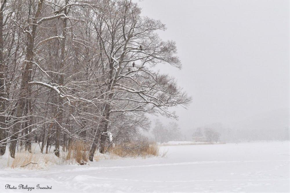 paysage hivernal à hokkaido