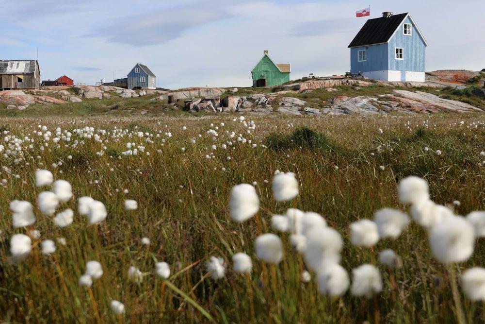 Prairie et linaigrettes près du village d'Oqaatsut dans la baie de Disko au Groenland