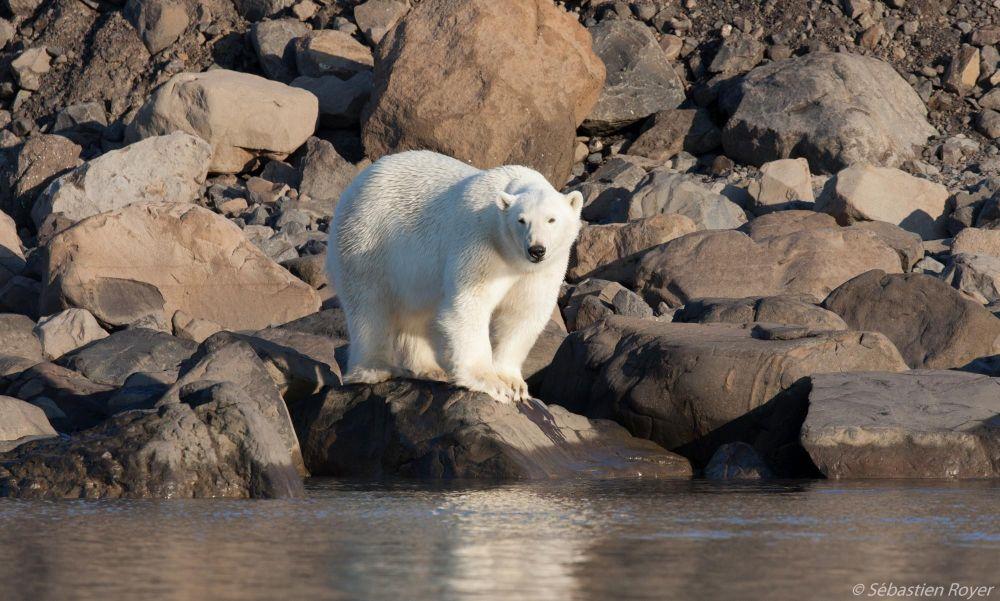 Photo voyage Groenland 12