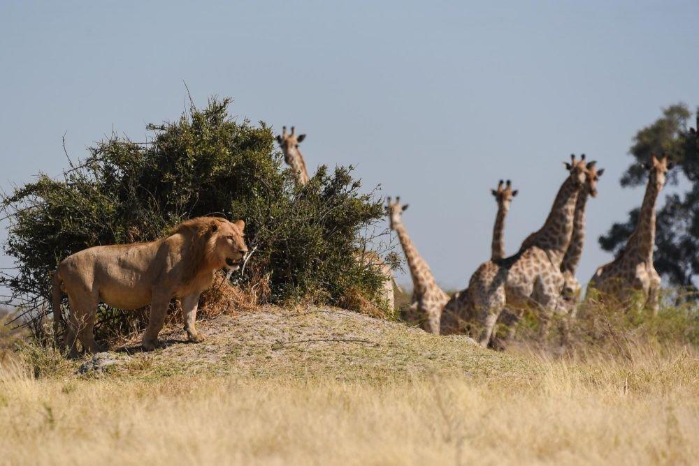 Photo voyage Zambie 7
