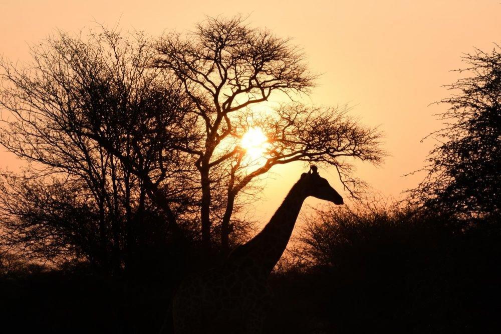 Photo voyage Zambie 4