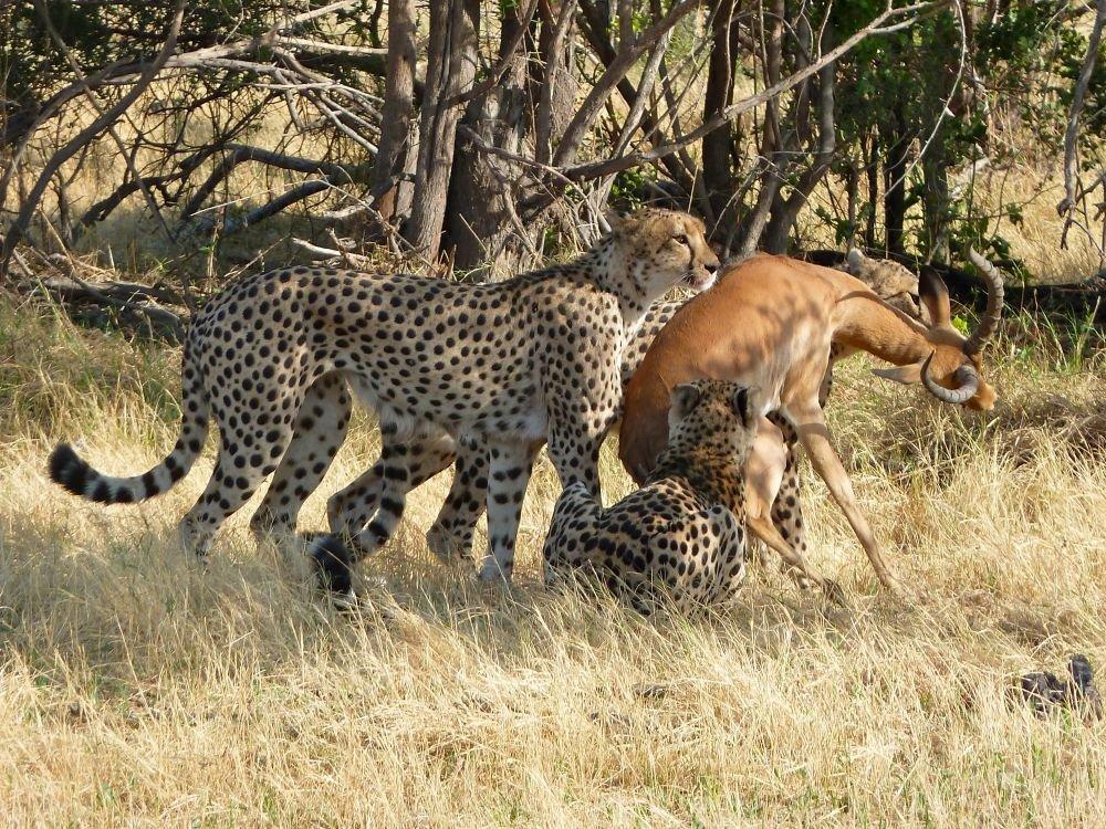 Photo voyage Botswana 11