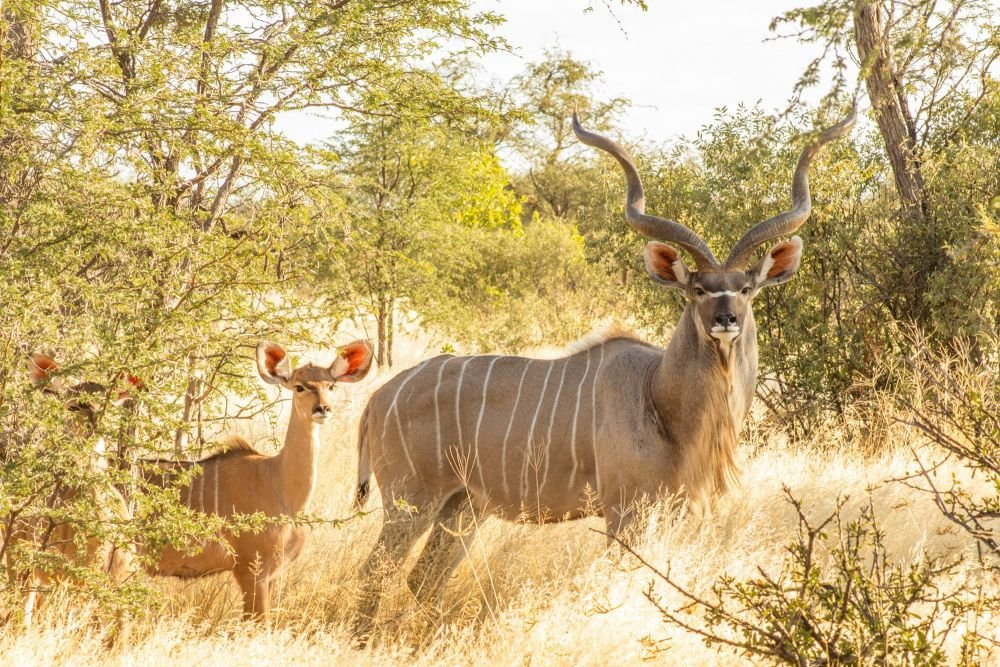 Photo voyage Botswana 6