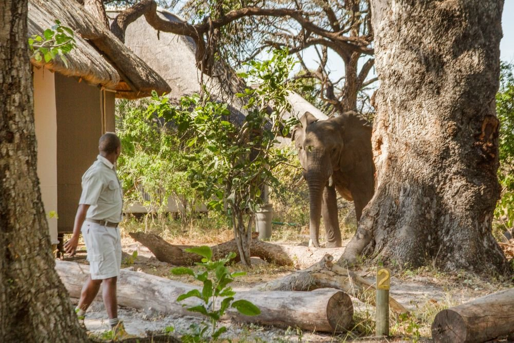 Photo voyage Botswana 7