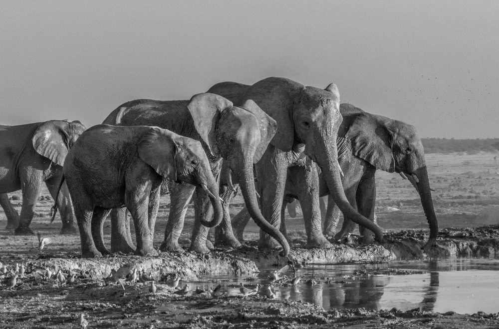Photo voyage Botswana 14