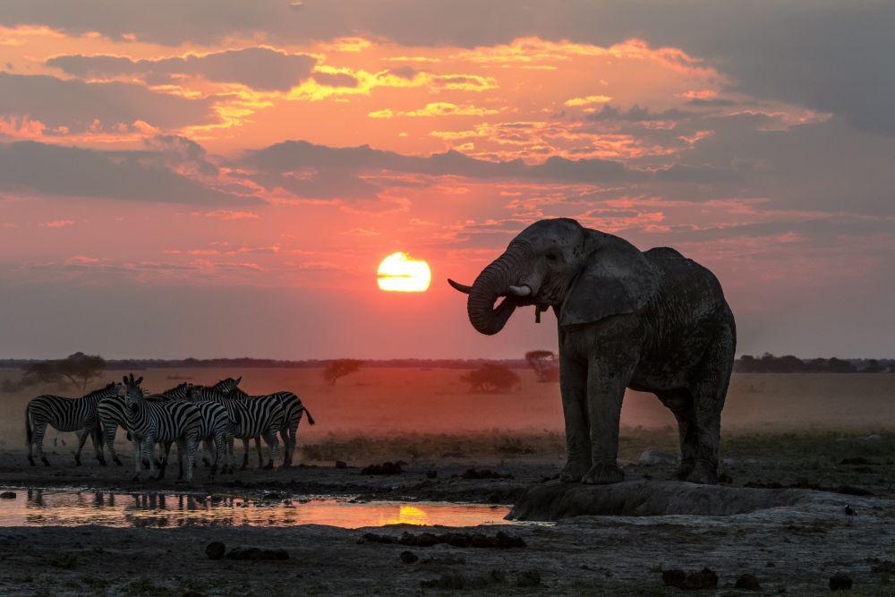 Photo voyage Botswana 16