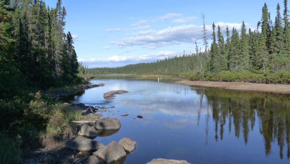 Rivière dans le forêt boréale au Canada