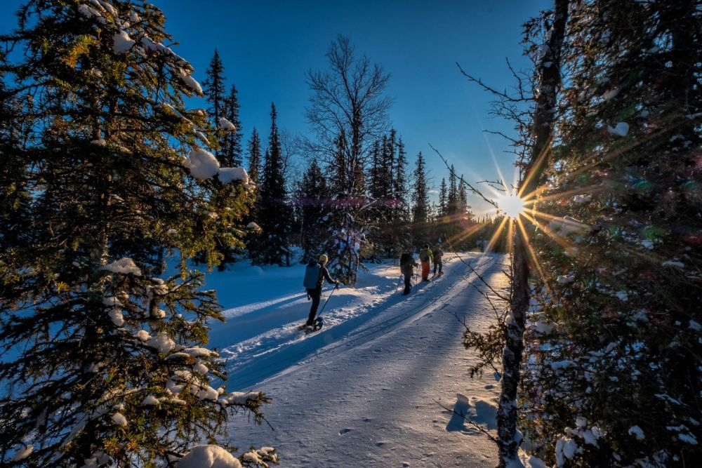 Atelier photo en Laponie dans la forêt boréale