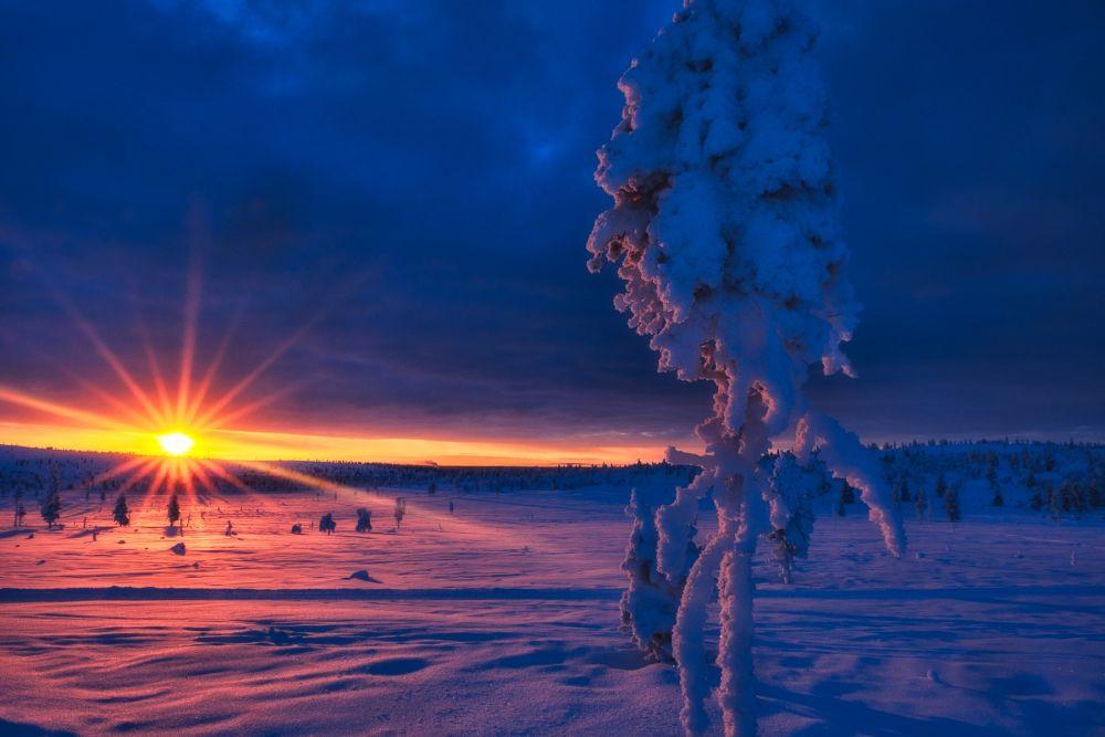 Arbre candélabre au lever du jour lors d'un voyage photo en Laponie