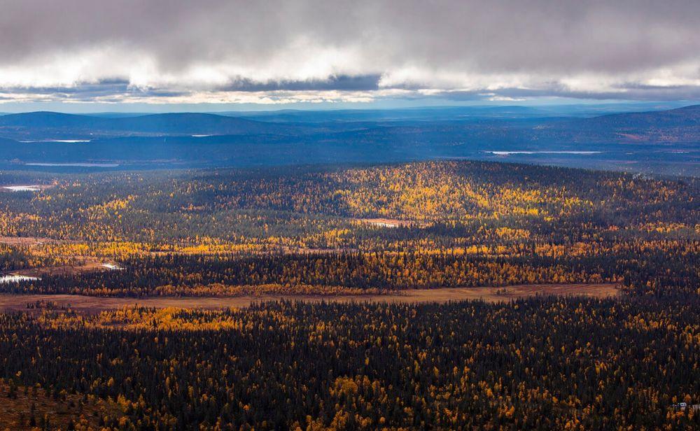 Vue sur la taïga depuis un petit sommet en Laponie finlandaise