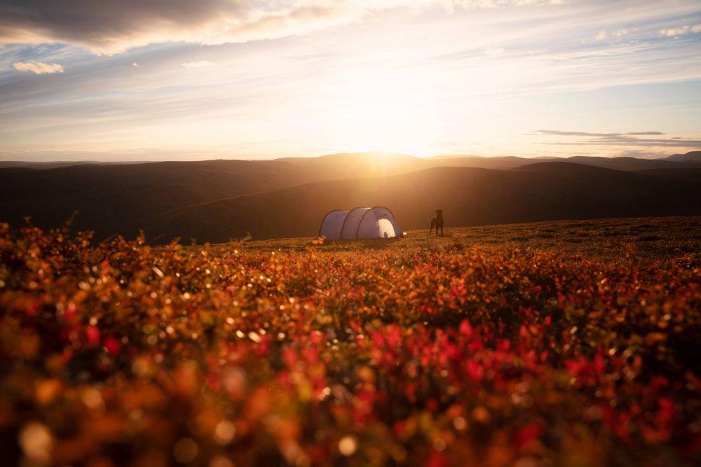 Bivouac dans l'été indien en Laponie
