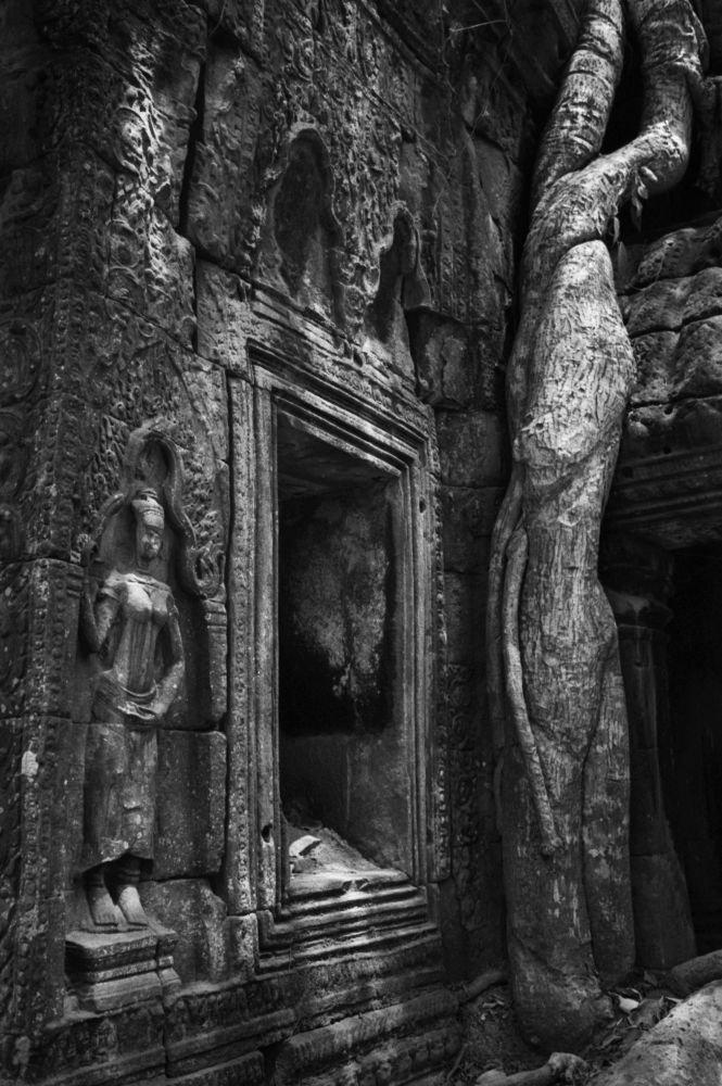Temple oublié dans la jungle au Cambodge