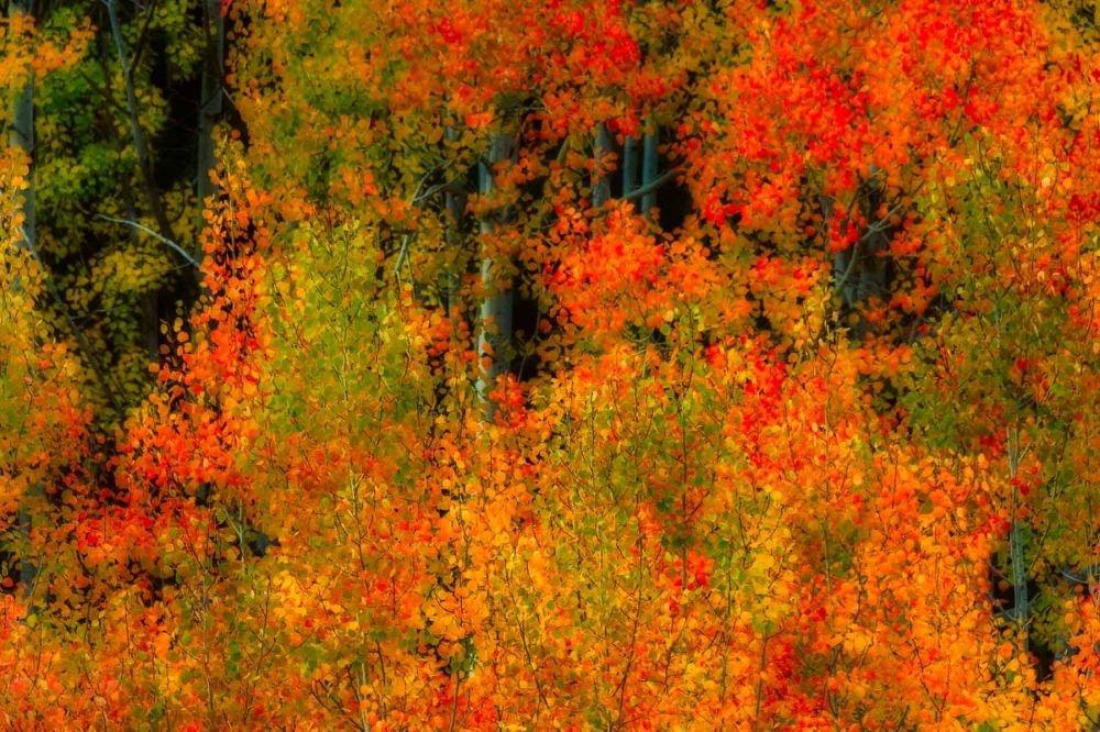 Palette de couleurs en automne dans le Mercantour