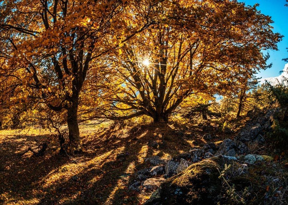 Lumières de l'automne dans le massif du Mercantour, en stage photo