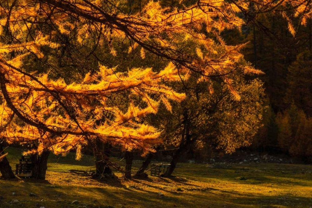 Magie des mélèzes en automne, dans le Mercantour