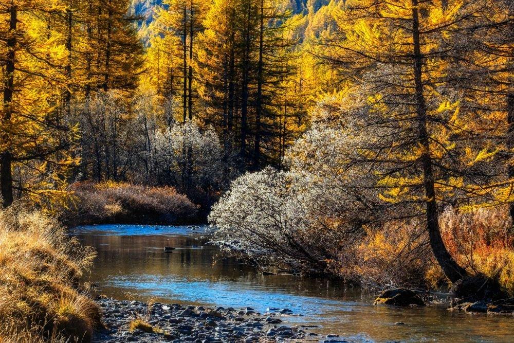 Torrent et forêt du Mercantour en automne