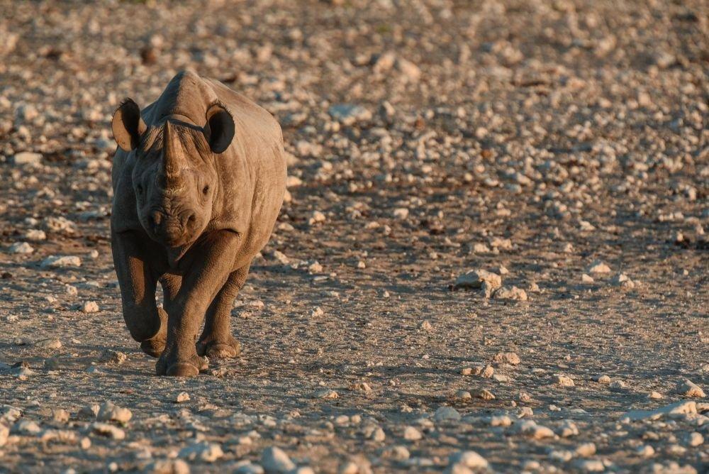 Photo voyage Namibie 2