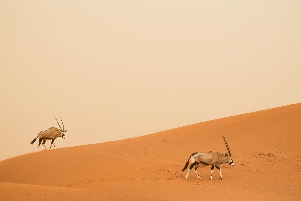 Photo voyage Namibie 8