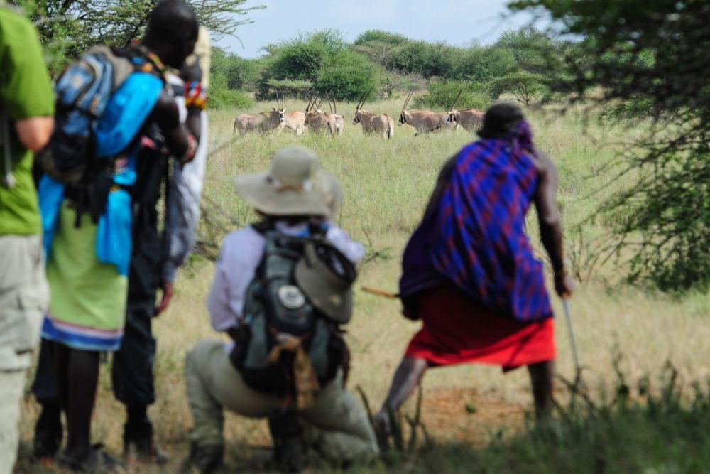 Observation de la grande faune lors du safari à pied, Kenya