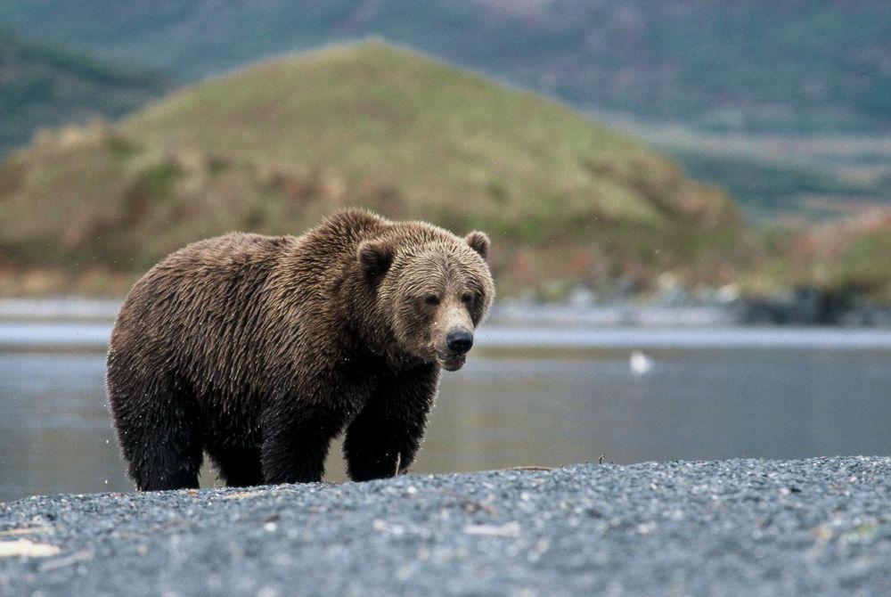 Laurent Cocherel Kodiak Alaska (9)