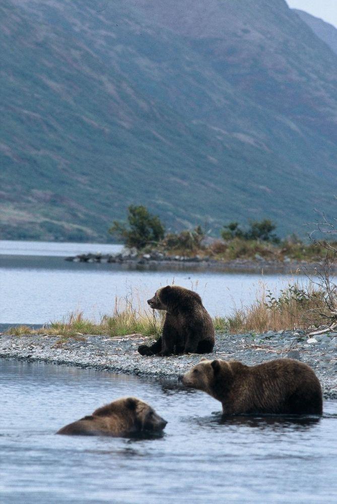 Laurent Cocherel Kodiak Alaska (6)