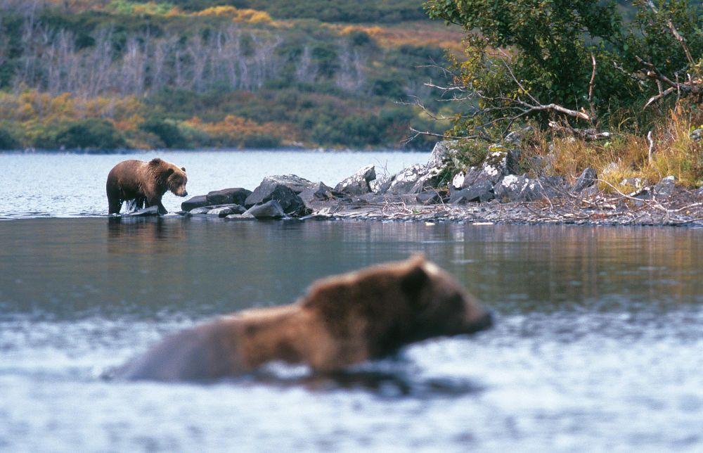 Laurent Cocherel Kodiak Alaska (27)