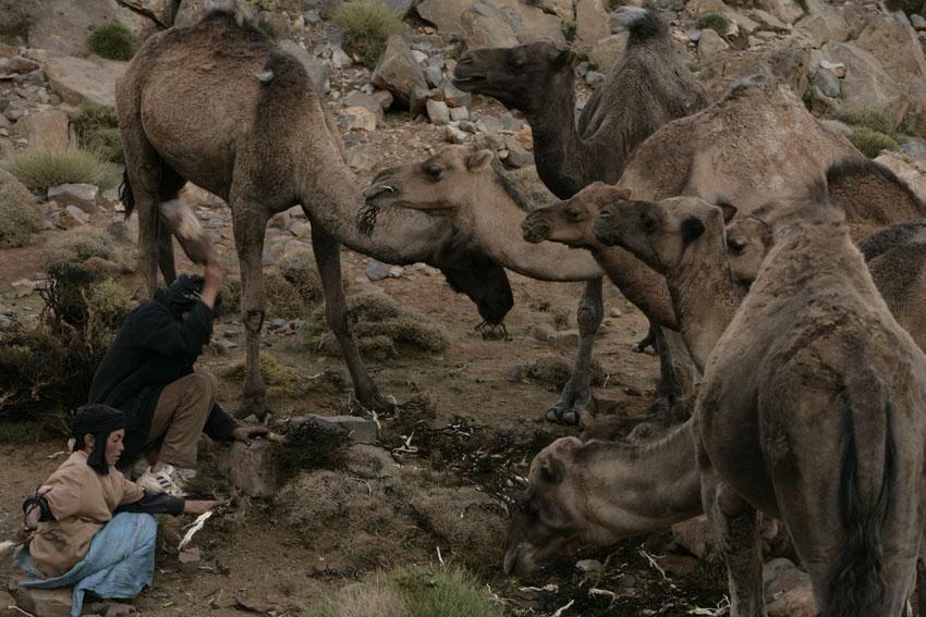 Xavier Zimbardo Maroc Transumance (77)