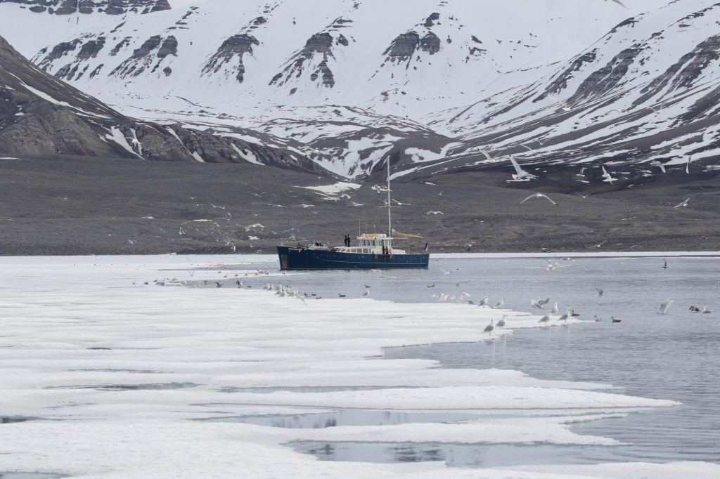 Faune arctique - croisière photo guidée par Laurent Baheux