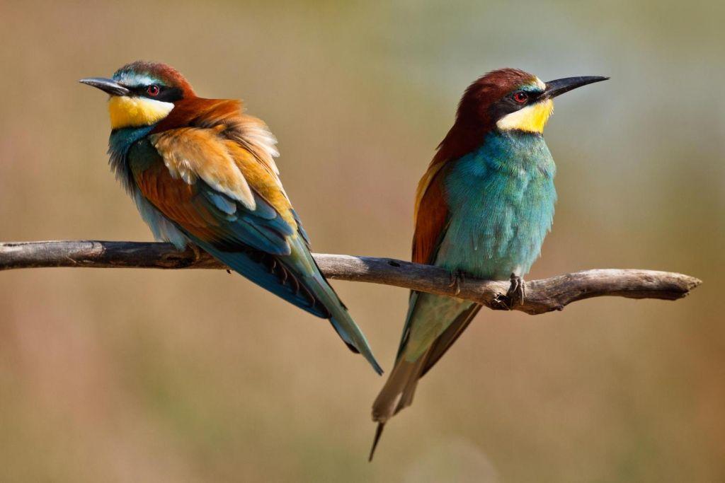 deux oiseaux colorés de dos sur une branche