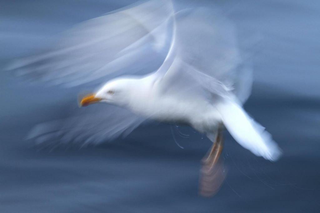 Ouessant et mer d'Iroise - séjour photo guidé par Christophe Courteau