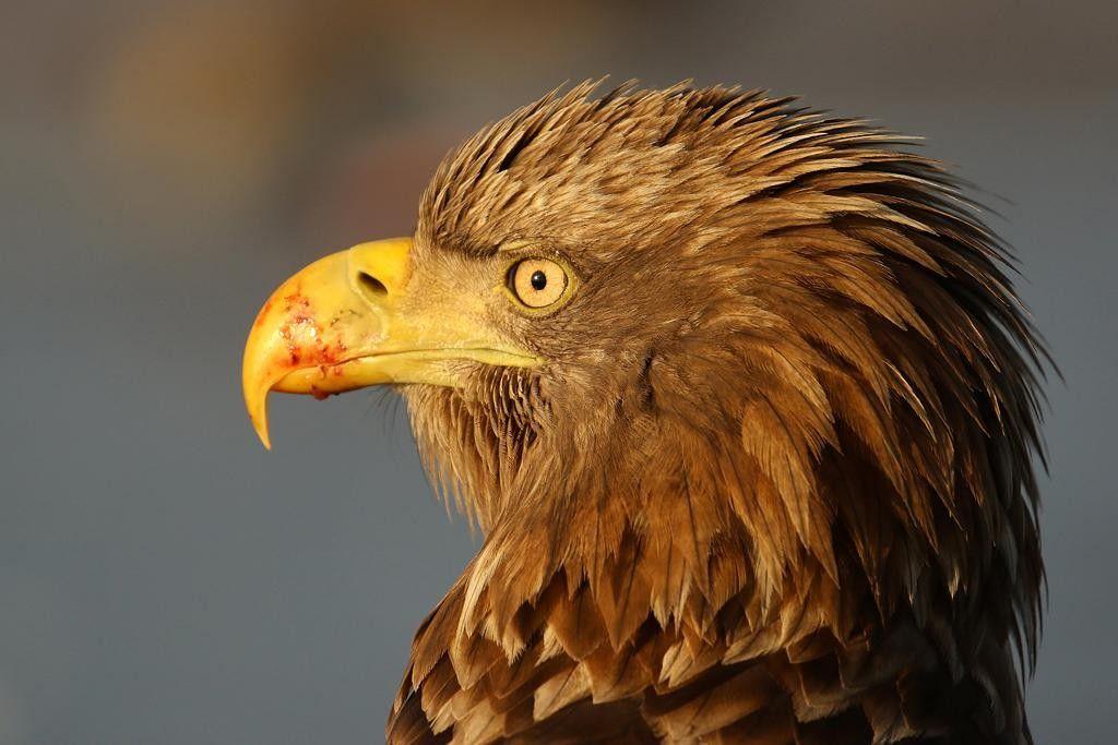 oiseau de dos les ailes ouvertes