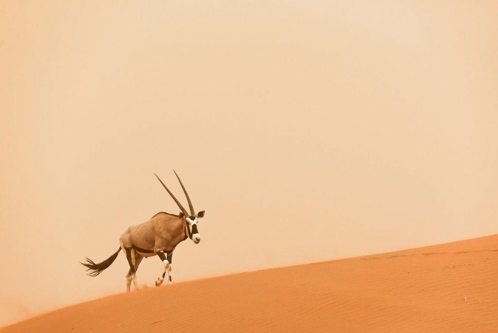 Oxyx dunes du Namib