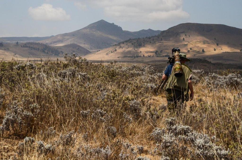 gelada ethiopie