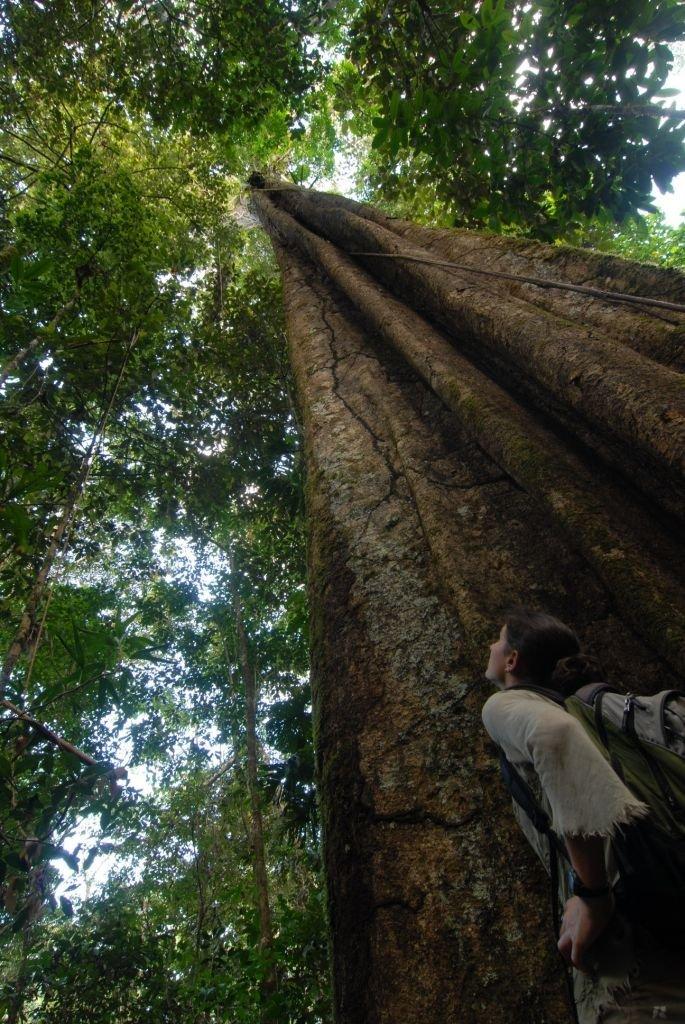 forêt amazonienne equateur