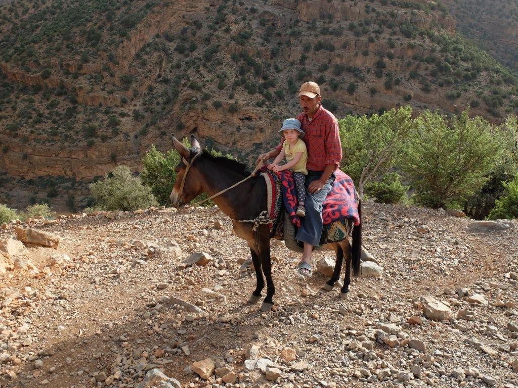 enfants sur le dos d'une mule