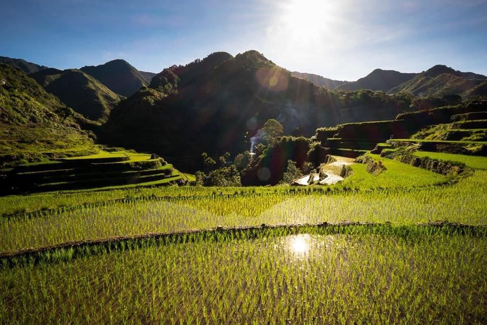 rizières dans la cordillère centrale aux Philippines